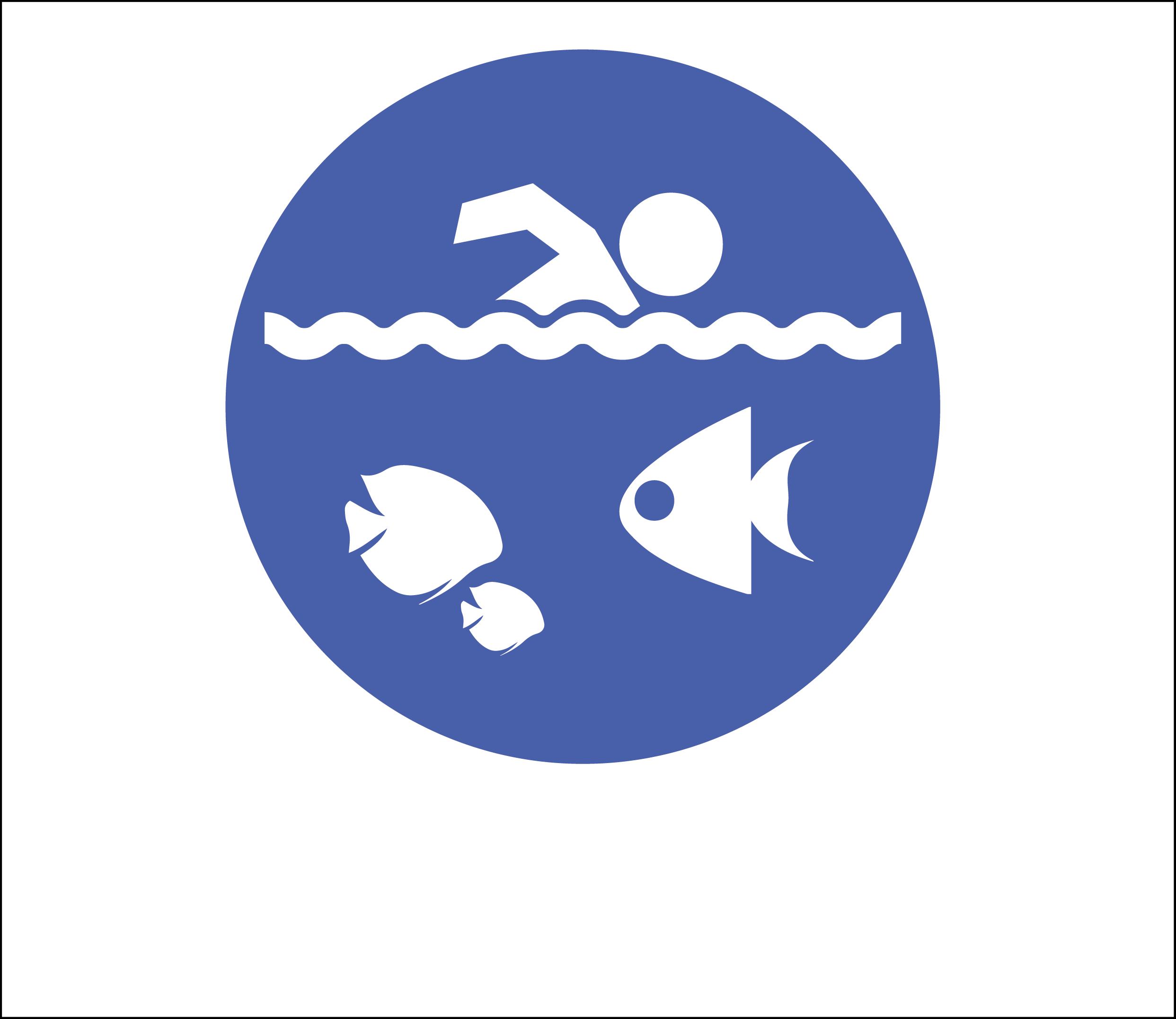 天然游泳池:与热带鱼一起游泳